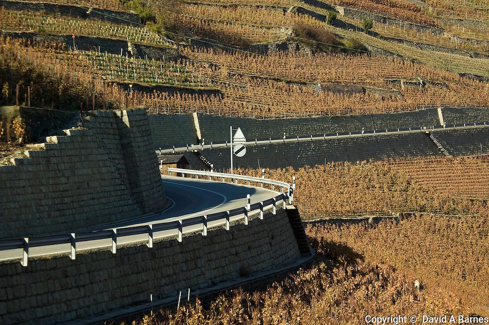 Highway in vineyard, autumn, Alps, Valais, Switzerland