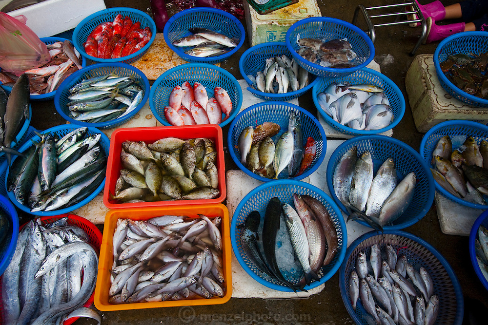 Different varieties of fish displayed at the Daxi Port in Taiwan.