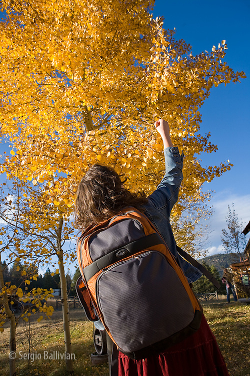 A young woman stops to appreciate the fall colors on a tree near Gold Hill, Colorado