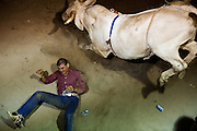 A rider is bucked off a bull amidst beer cans at the El Bajio ranch in Von Ormy, Texas.  The ranch hosts monthly Mexican style bull-riding, called Jaripeo.  Anyone who signs a liability waver and fashions spurs onto their boots can take a ride for $20.  No cash prizes are awarded, but cowboys earn the respect of the crowd for their style and staying power, riding the bull until it stops bucking instead of eight seconds, common in American style rodeo.
