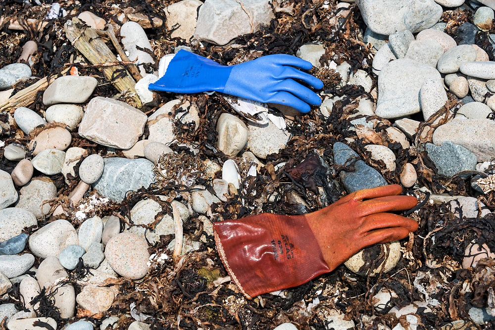 Rubber gloves washed up on the tide line of Harvey's Beach, Isle au Haut, Maine.