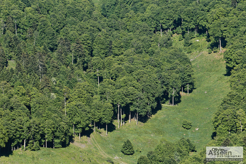Clearing and deciduous forest seen from summit of Mount Cagire.