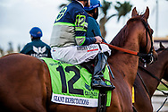 HALLANDALE BEACH, FL - JANUARY 27: Giant Expectations and Gary Stevens at the Pegasus World Cup Invitational at Gulfstream Park Race Track on January 27, 2018 in Hallandale Beach, Florida. (Photo by Alex Evers)