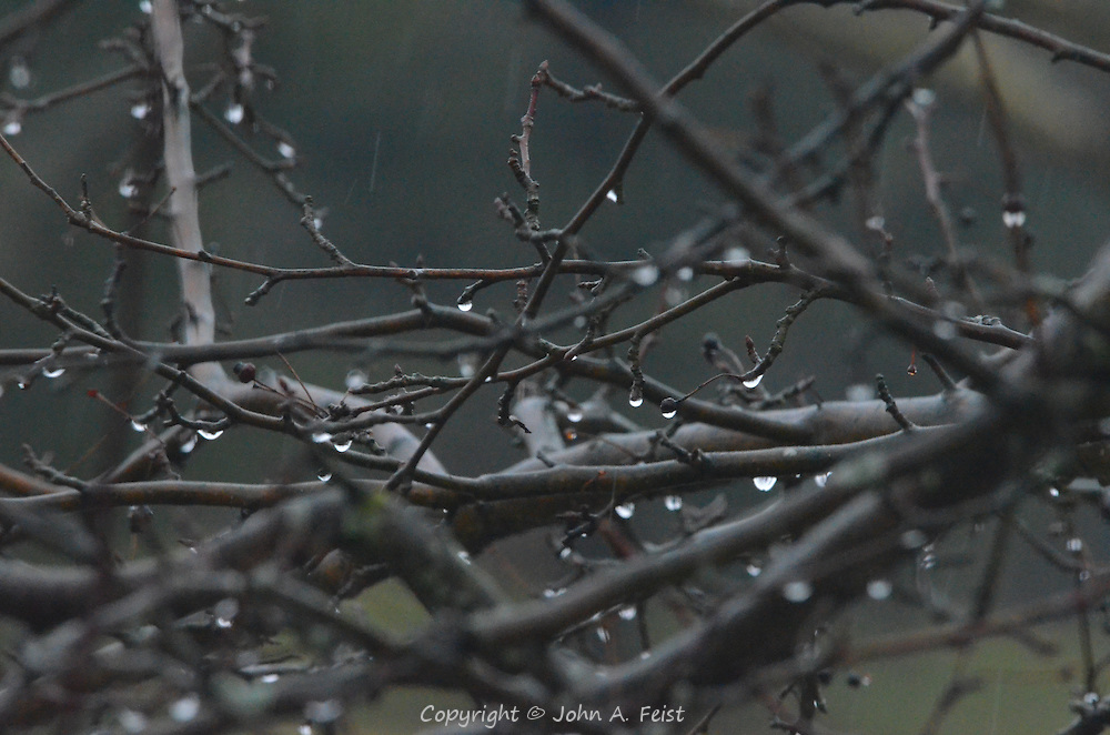 In this tangle of branches, are many droplets, some starting, some falling.  What appears to be streaks is rain falling in the background.  Hillsborough, NJ