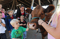 Mason Stewart, 5, gets to know Bailey, a two year-old heifer on Thursday at the Monterey County Fair. An orphan, Bailey was brought to the fair in 2011 only two days old, and was bottle-fed by her handler, McKenzie Miller, in pink, from Corral de Tierra in Salinas. The cow is now very healthy indeed, and is pregnant for the first time.