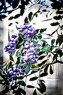 Floral Gallery - DesignLIFE