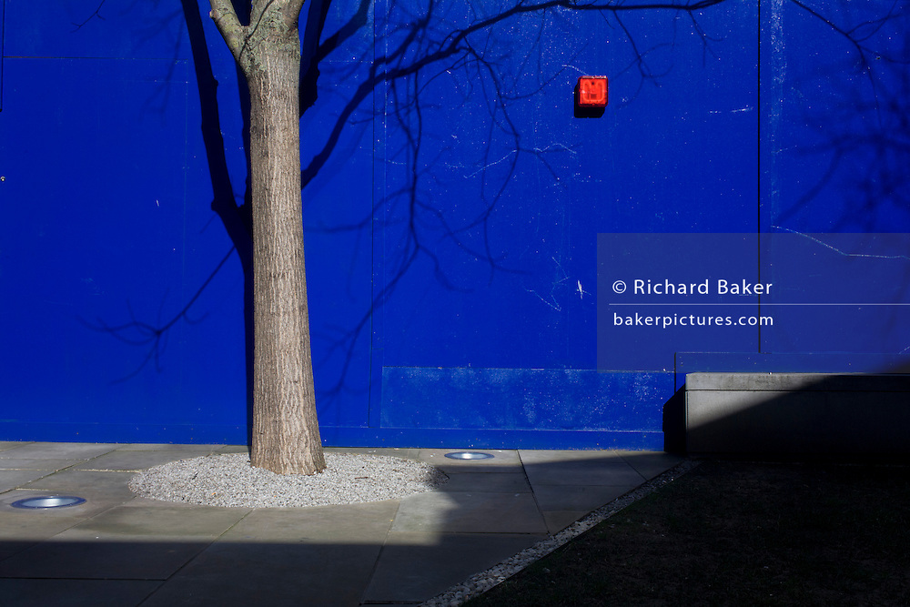 An urban tree is protected from a construction site by blue hoarding panels in the City of London. The landscape looks both incongruous and disturbing to the eye with the blue hoarding and its red safety light that glows in the daylight. The carefully planted tree continues to grow in situ on a pavement split between paving stones and a worn grass verge in the heart of the capital's financial district otherwise known as the Square Mile, after its circling Roman wall..