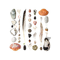 Beach stones, asphalt chunk with reflective highway paint stripe, fir cone, lobster-claw bands, aluminum soda can, Common Slipper Shells (Crepidula fornicata), Jonah Crab (Cancer borealis), Common Periwinkle (Littorina littorea), birch bark (Betula papyrifera), Coralline (Corallina officinalis), Black-backed Gull feather (Larus marinus), sea glass, spruce cone, acorn (Quercus sp.), charcoal (burnt wood), Green Sea Urchins (Strongylocentrotus drobachiensis), lichen, Toad Crab (Hyas sp.), feathers, peach pit (Persica sp.), plastic liner from a soda bottle top, Rock Crab (Cancer irroratus), Horse Mussel (Modiolus modiolus)