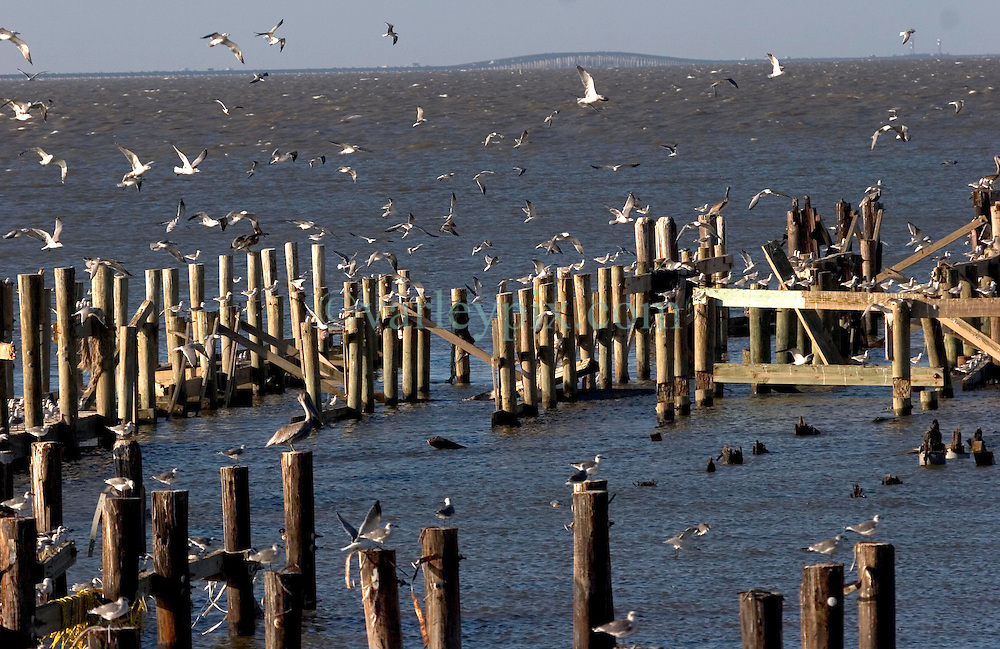 03 Oct, 2005. New Orleans, Louisiana.  Hurricane Katrina aftermath. <br /> Remnants of two popular New Orleans restaurants, Jaeger and The Dock near the Southern Yact Club on the shores of Lake Pontchartrain in Lakeshore, New Orleans. All that remains are the supporting pillars, now a refuge for seagulls and pelicans.<br /> Photo; ©Charlie Varley/varleypix.com