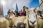 Sheep driven over London Bridge