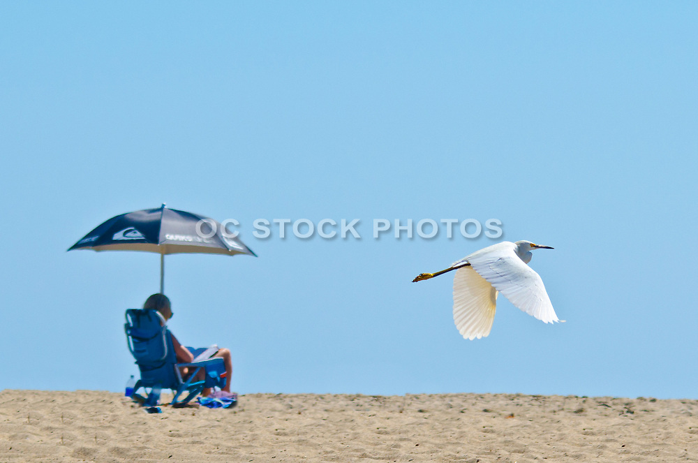 Relaxing on the Beach in Orange County California