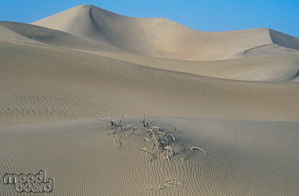 Roots in sand dune