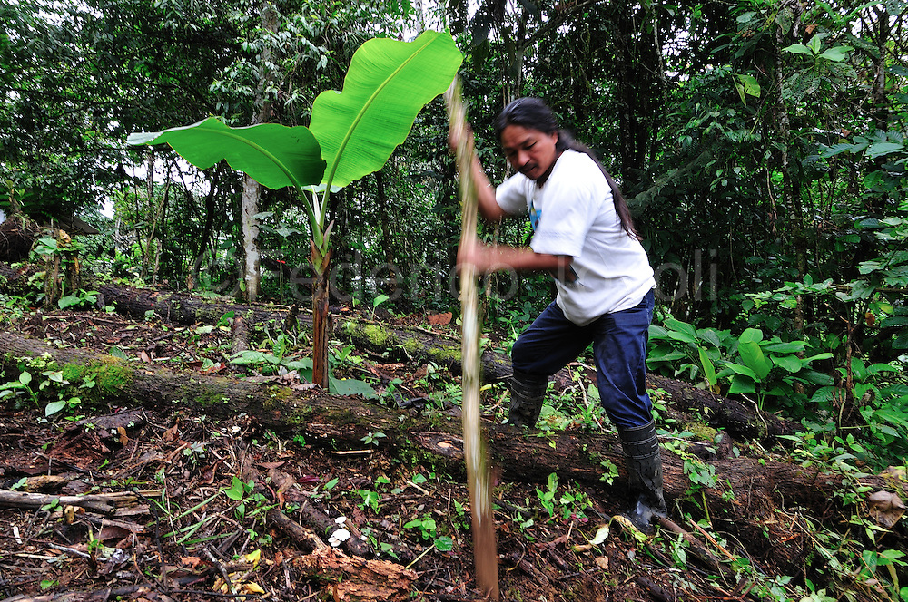 Nelson Mamallacta using a bough for to bury the new seeds on his family garden