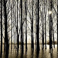Silhouettes of some bare trees standing on the banks of a river during high water
