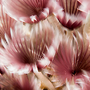 Abstract image of Sabellidae or feather duster worms.