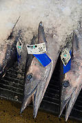 Ono, Wahoo, United Fish Auction, Honolulu, Oahu, Hawaii