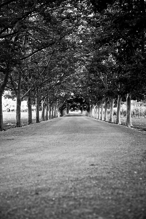 Napa Valley tree lined driveway