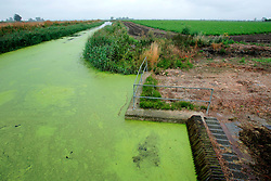 UK ENGLAND CAMBRIDGESHIRE WICKEN 7AUG06 - Main drain in the Wicken Fen National Nature Reserve, managed by the National Trust is one of Britain's oldest nature reserve dating back to the late 1800s...jre/Photo by Jiri Rezac..© Jiri Rezac 2006..Contact: +44 (0) 7050 110 417.Mobile:  +44 (0) 7801 337 683.Office:  +44 (0) 20 8968 9635..Email:   jiri@jirirezac.com.Web:    www.jirirezac.com..© All images Jiri Rezac 2006 - All rights reserved.