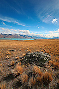 distant view of the southern alps beyond the tussock and blue lake in the mackenzie country, new zealand