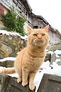 Tashirojima kallas f&ouml;r &quot;katt&ouml;n&quot; eftersom h&auml;r lever hundratals katter tillsammans med ca 50 personer.   <br /> Ishinomaki, Miyagi Prefecture, Japan. <br /> Fotograf: Christina Sj&ouml;gren<br /> Copyright 2018, All Rights Reserved