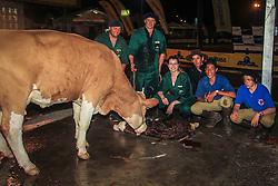 Nascimento de bezerro da Raça Simental durante a 39º Exposição Internacional de Animais, Máquinas, Implementos e Produtos Agropecuários. FOTO: Vilmar da Rosa/ Agência Preview