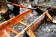 Using a sluice box to pan for gold. Central Brooks Range north of Bettles, Alaska