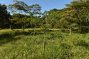 LA MADRID,VILLAVINCENCIO 05 SEPT: This image is of the Bosque la Reconciliación Papa Francisco (Forest of Reconciliation) in the La Madrid section of Villavincencio. The forest has 400 seedlings that were planted in homage to Pope Francis who will be visiting the area on September 8, 2017. The Pope will plant a tree from this forest at a special event that is scheduled.