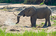 Diggin for water in  Kruger NP, South Africa