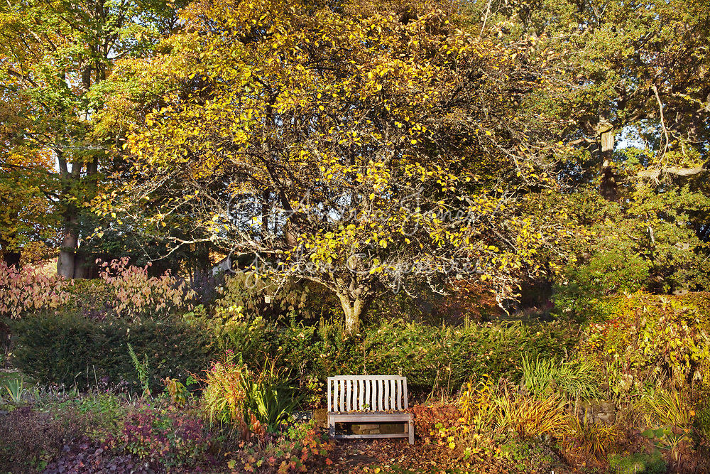 Bench seat on the main lawn with a large Malus 'James Grieve' (apple) tree, Taxus baccata (yew) hedge and Cornus alba 'Spaethii' (yellow dogwood) on the Cornus Walk