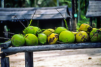 Riau Islands, Bintan. Coconuts in a small village on Trikora beach, Bintan east coast.