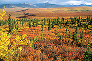Alaska. Denali National Park. Autumn tundra.