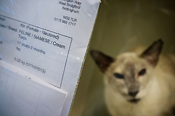 Cat awaiting treatment at Rushcliffe Veterinary Surgery, Nottingham, UK.