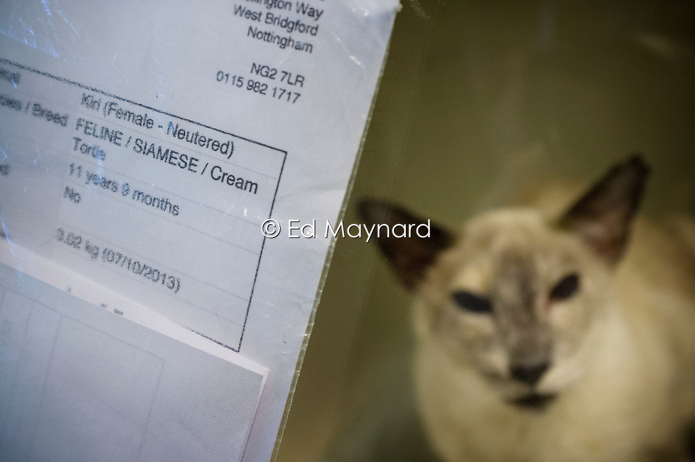 Cat awaiting treatment at Rushcliffe Veterinary Surgery, Nottingham, UK.