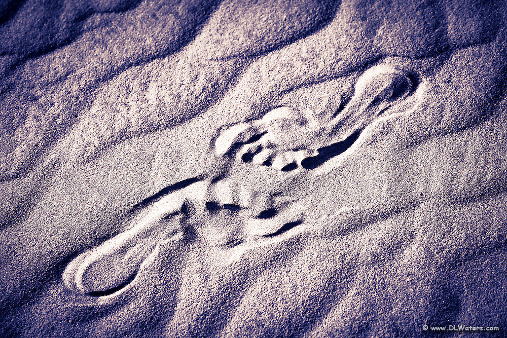 I was teaching a photo workshop when I came across these footprints in the sand (honest I just found them like this) at Jockey's Ridge State Park.