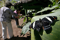 Unidentified torists visit The Butterfly Farm in Alajuela, about 20 km North-West of San Jose, Costa Rica on Sunday January 7, 2007.  The Butterfly Farm not only functions as a tourist destination but also as a butterfly breeding resort to export thousands of Pupas (butterfly second stage in metamorphosis) to Europe. (Photo/Cristobal Herrera)