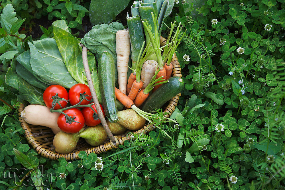 Fruit and vegetable basket surrounded by clover