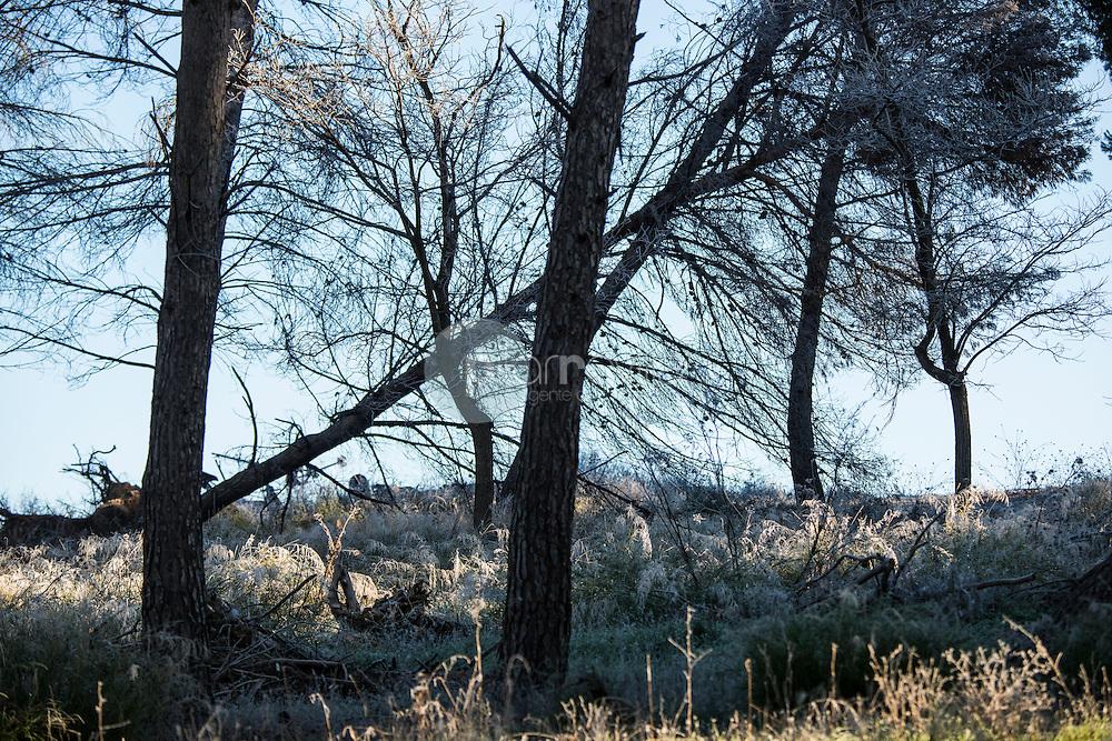 Bosque de pinos. Almansa. Albacete ©Antonio Real Hurtado / PILAR REVILLA