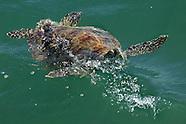 Wild sea life