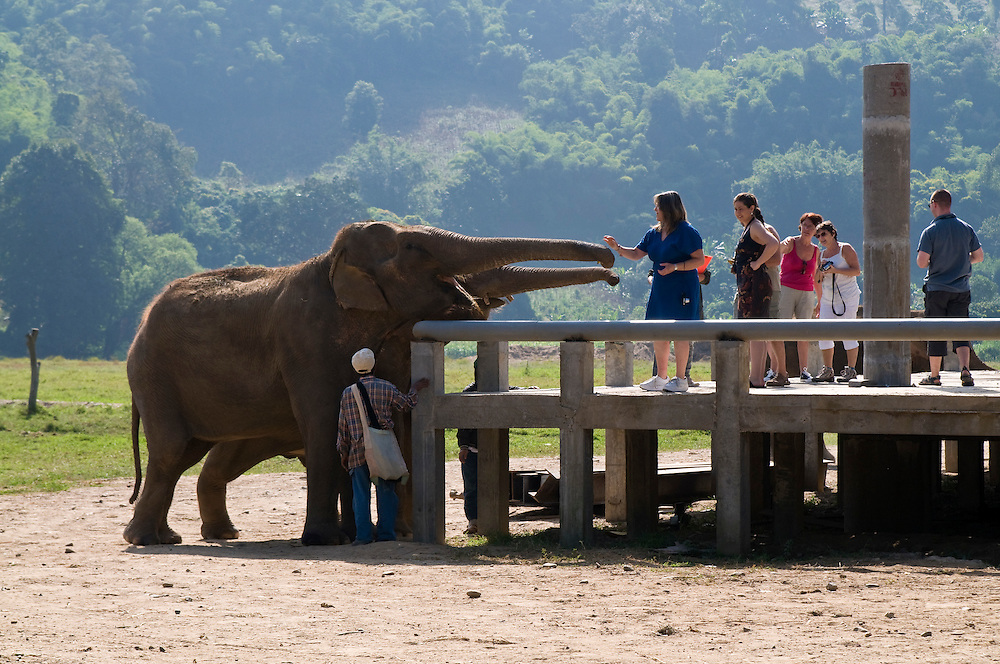 "Tourists and volunteers enjoy feeding the elephants at the Elephant Nature Park near Chiang Mai, Thailand.  Sangduen ""Lek"" Chailert founded the park as a sanctuary and rescue centre for elephants.  The park currently has 32 elephants sponsored and supported by volunteers from all over the world."