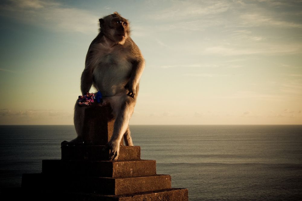 A monkey sits on top of a pillar while holding flowers near Uluwatu Temple, Bali, Indonesia.