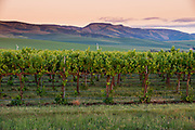Garrison Creek Vineyards at Sunset
