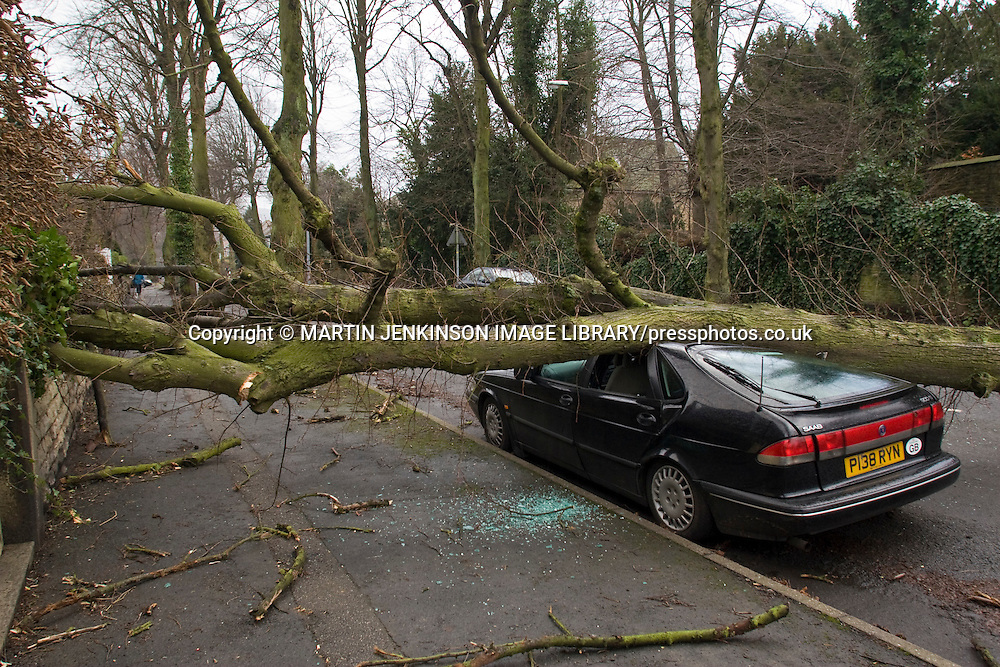 Tree blown down by high winds crushes a car roof...© Martin Jenkinson, tel 0114 258 6808 mobile 07831 189363 email martin@pressphotos.co.uk. Copyright Designs & Patents Act 1988, moral rights asserted credit required. No part of this photo to be stored, reproduced, manipulated or transmitted to third parties by any means without prior written permission