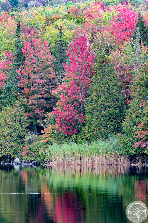 Fall foliage at Ricker Pond, in the Groton State Forest, Ricker Mills, Vermont.