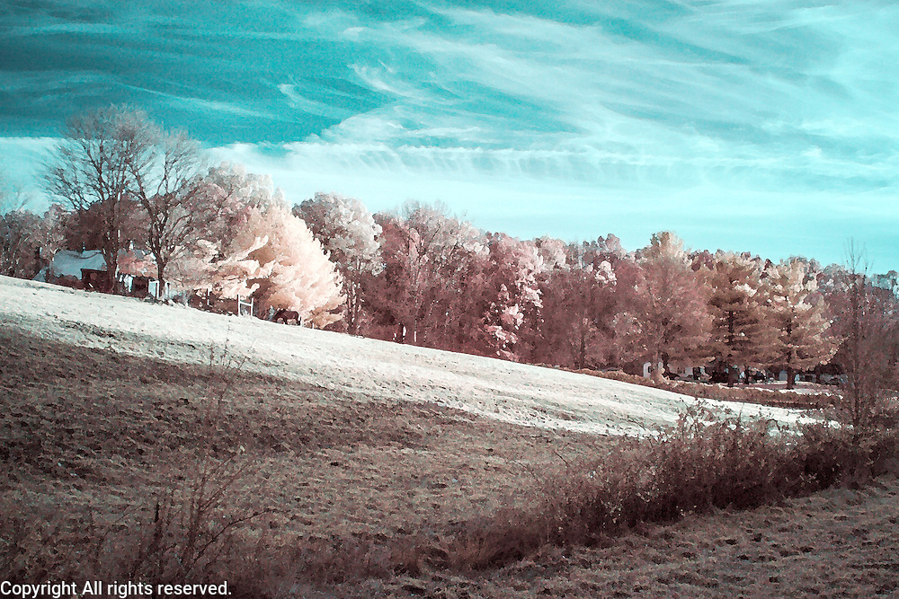 Infrared (IR) image - This image was made at Firefly Farm in Central Kentucky.  The processing is a take on the blue/red channel inversion except that I added a bit of red to the foliage and I softened the image to give it a painterly effect.