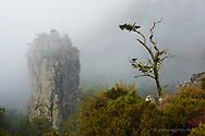 Misty morning with tiny tree overshadowing the mighty pinnacle rock