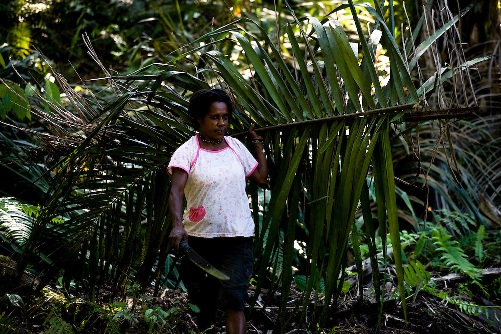 A worker thins some foliage in the 22,000 hectare palm oil plantation of the Sinarmas Group. The plantation employs 11,000 workers. The Sinarmas Group has plans for a 20,000 hectare expansion in Papua, Indonesia, of the palm oil plantation on Sisik land, but it is opposed by local residents because the project will destroy the rainforest that feeds them, Sept. 4, 2008..Daniel Beltra/Greenpeace