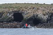 Expedition tourists explore the wildlife and landscapes of Isla de Los Estados, Argentina.
