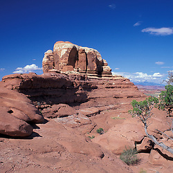 Canyonlands National Park, UT.Sandstone formation. Needles District. Juniper (utah), juniperus osteosperma.