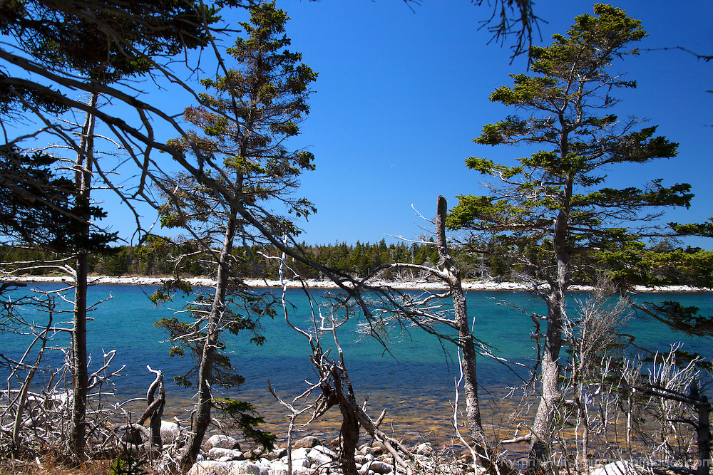 North America, Canada, Nova Scotia, Guysborough County. Trees and shoreline of Black Duck Cove Day Use Park.