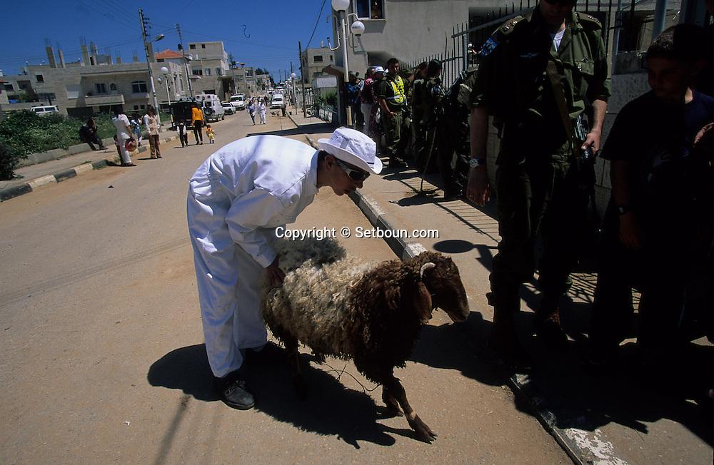 "= The Samaritans during ""Pessah""' (Easter) sacrifice on Mount Gerizim    Israel   (israelite tribe),  near Sekhem  /// Les Samaritains, sacrifice de paques sur le mont  Gerizim (Sekhem)   Israel  +"